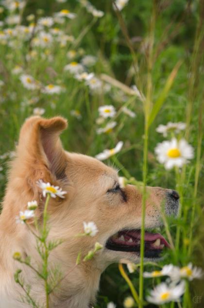 Urlaub mit Hund im Harz
